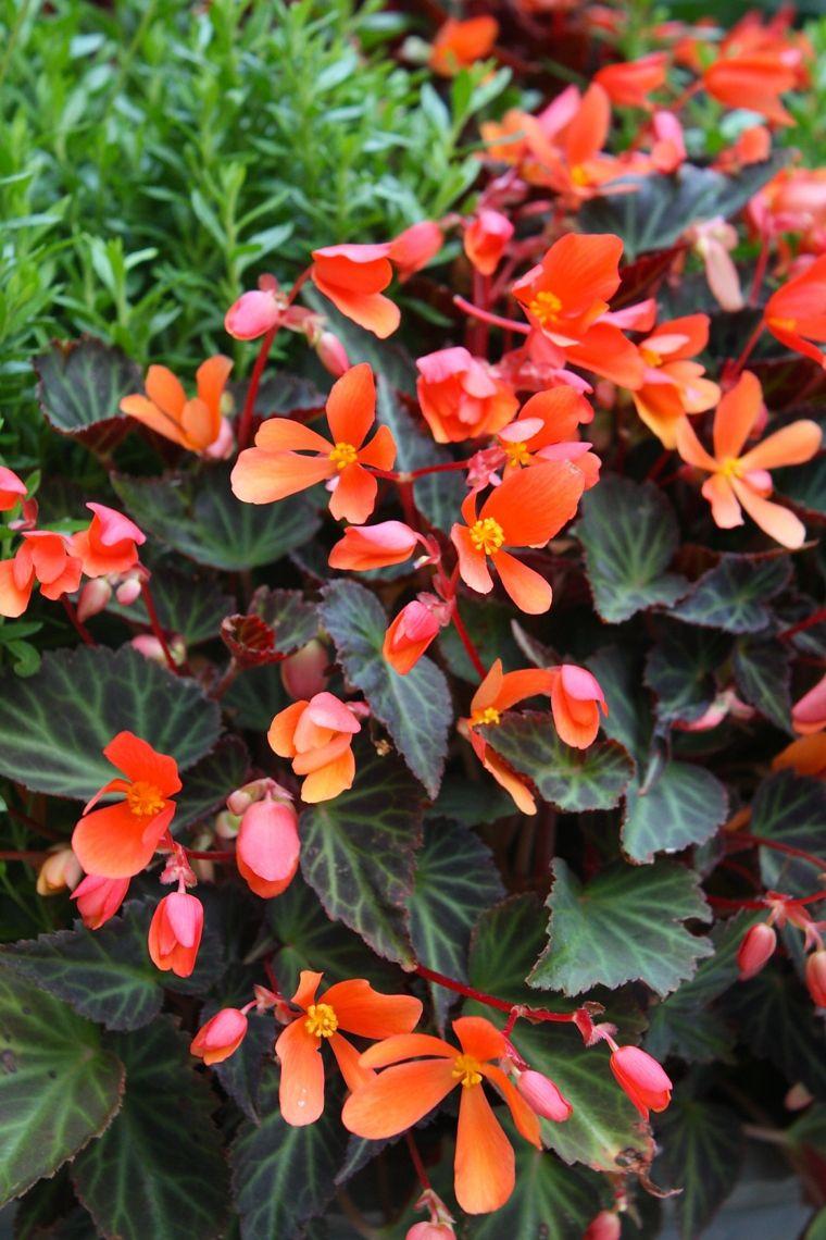 plantas de sombra  opciones para el jardín (con imágenes