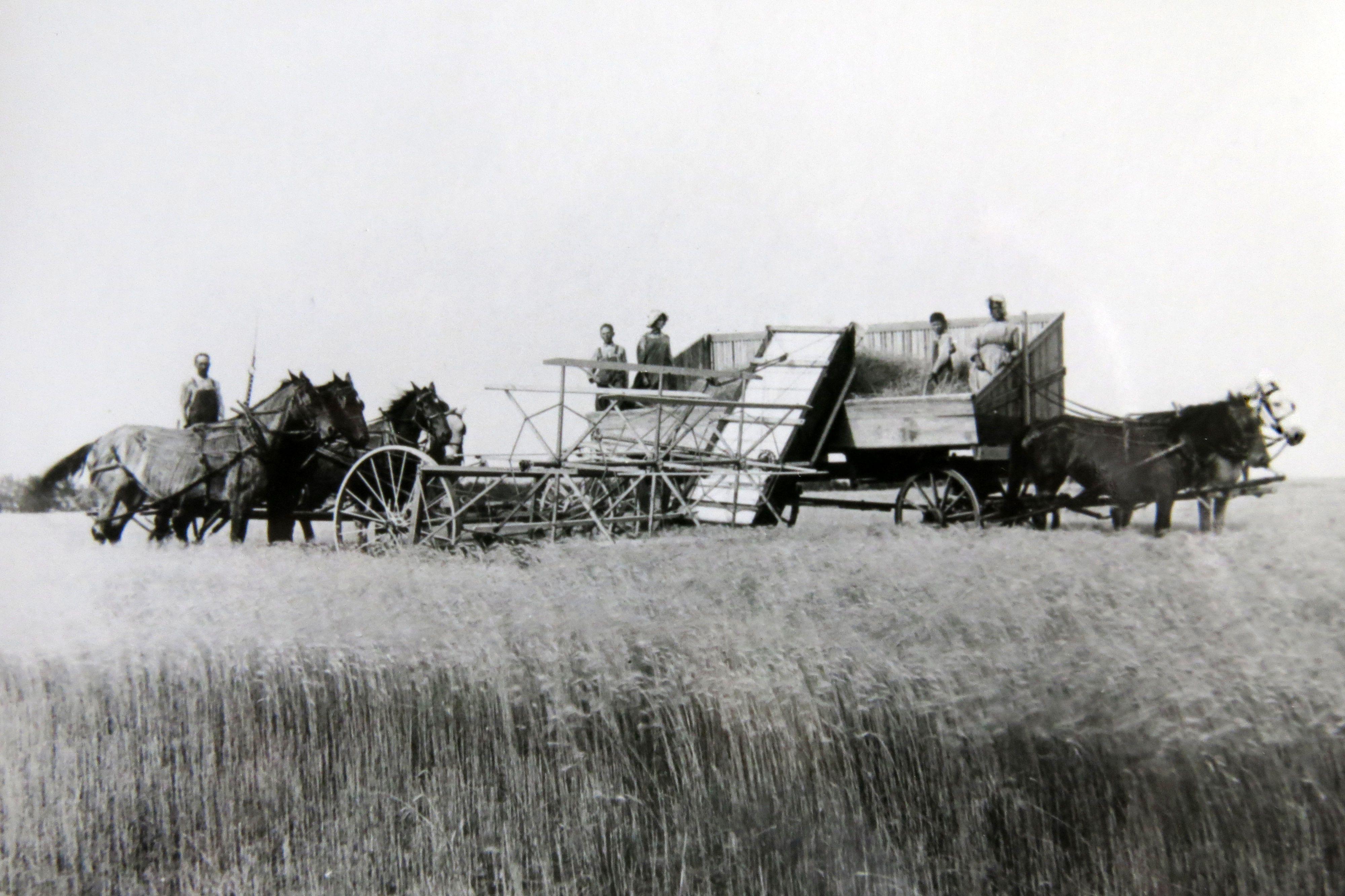 Wheat harvest east of Jennings, Kansas in 1914   Kansas, USA   Pinterest