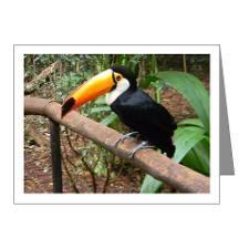 Brazilian Tucan Note Cards (Pk of 20)