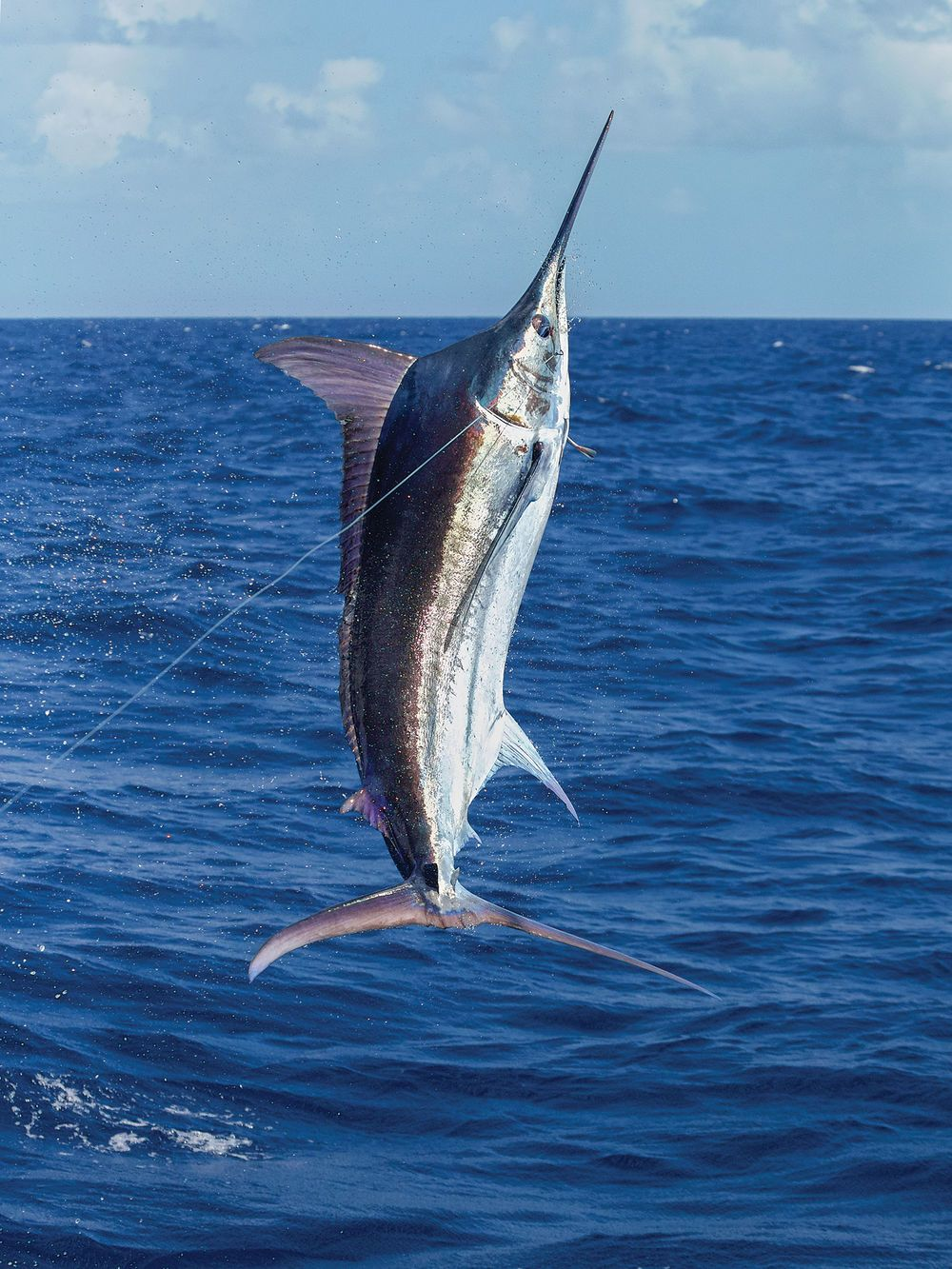 marlin - photo #15