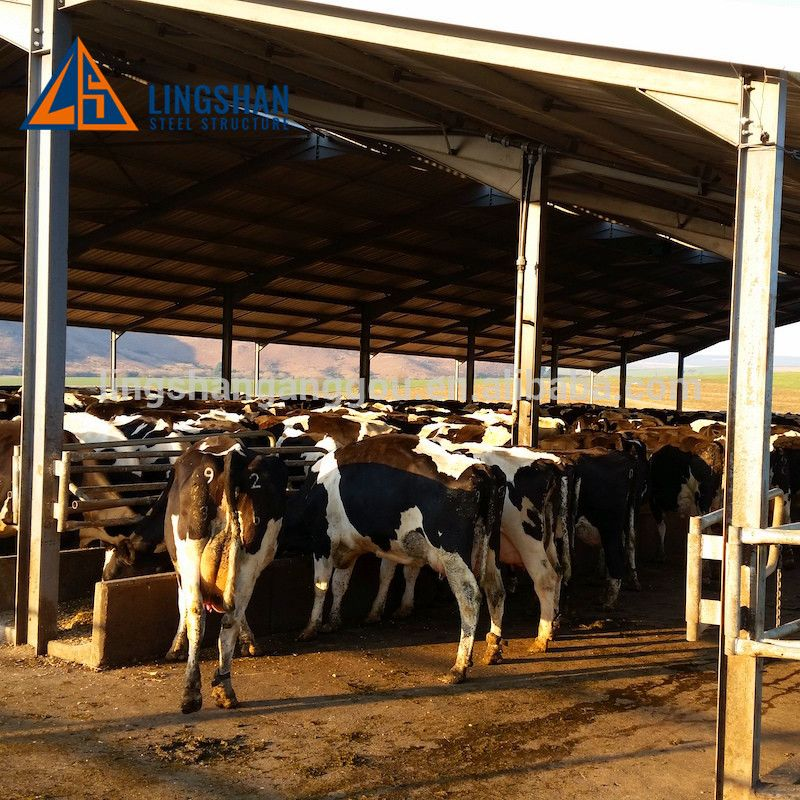 Dairy Barn Farm Construction Plan Cost Metal Cattle Shed