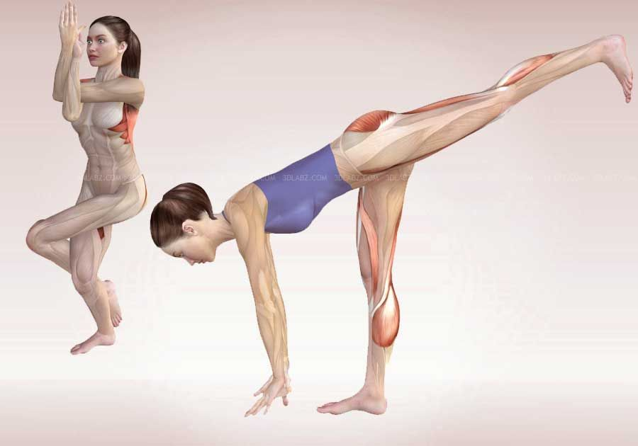 Anatomy of Yoga Poses | Yoga Exercises 3D Illustrations | Yoga ...