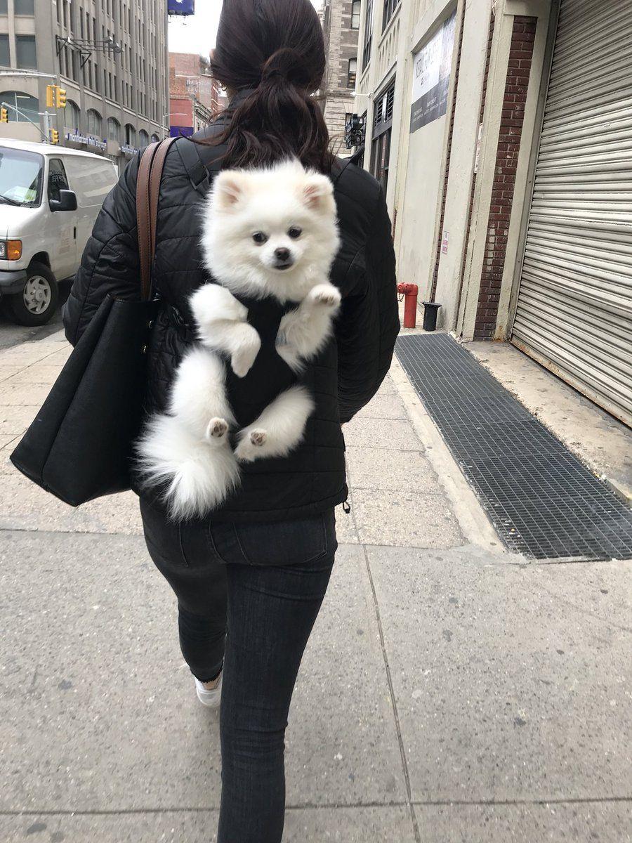 Paris On Cute Baby Animals Fluffy Dogs Cute Pomeranian