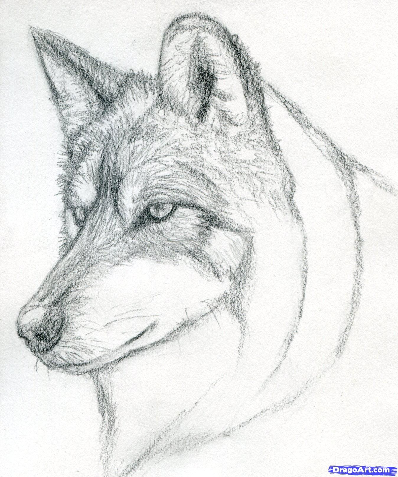 Easy pencil drawings step by step wolf learn how to draw a wolf head mexican
