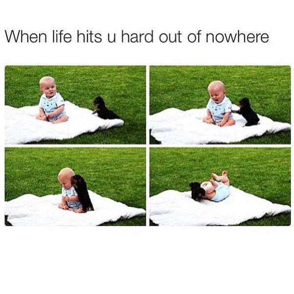 When Life Hits You Hard Out Of Nowhere Cute Memes Baby Puppies Memes