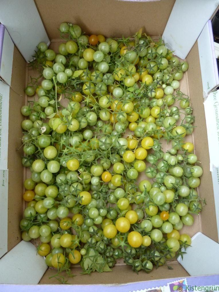 gr ne tomaten nachreifen lassen garten garden diy garden decor und garden images
