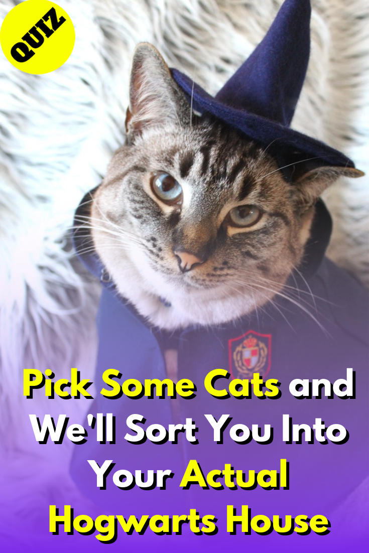 Pick Some Cats And We Ll Sort You Into Your Actual Hogwarts House Hogwarts Houses Quiz Hogwarts Houses House Quiz
