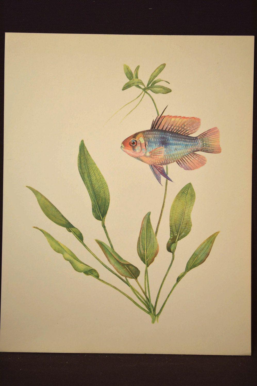 Tropical Fish Print Aquarium Fish Wall Art Decor Aquatic Plant ...