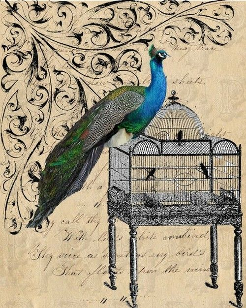 Flourish Graphics Peacock Peacock Images Peacock Crafts