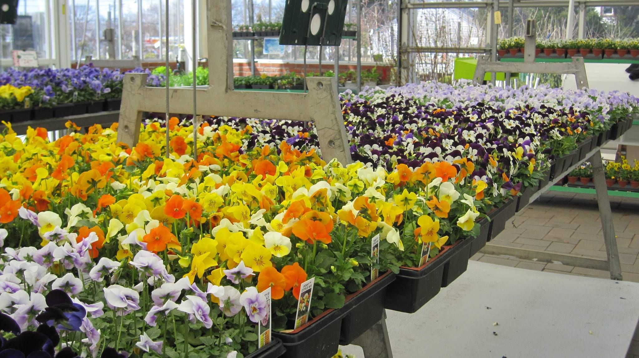 ATLANTIC NURSERY U0026 GARDEN SHOP 250 Atlantic Avenue Freeport, NY 11520 4927  Phone: