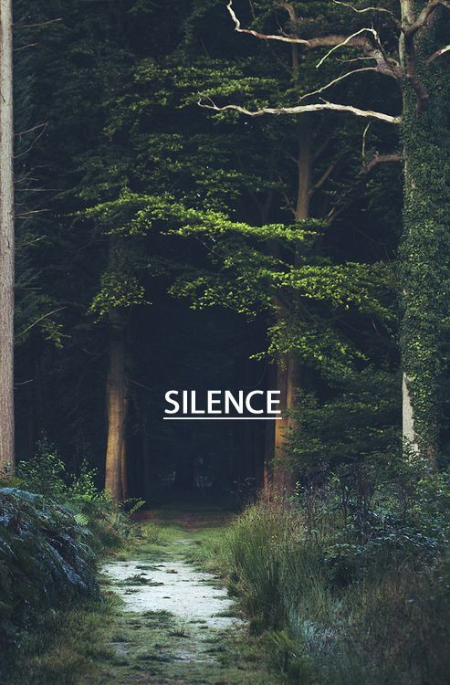 Woods Forest Solitude Silence I Am A Loner In Society Which You Are Expected To Be Extrovert And Proud About It