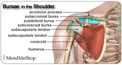 Shoulder burisits bursae anatomy of the shoulder bursae plural shoulder burisits bursae anatomy of the shoulder bursae plural for bursa are flattened fluid filled sacs that function as cushions between your bones ccuart