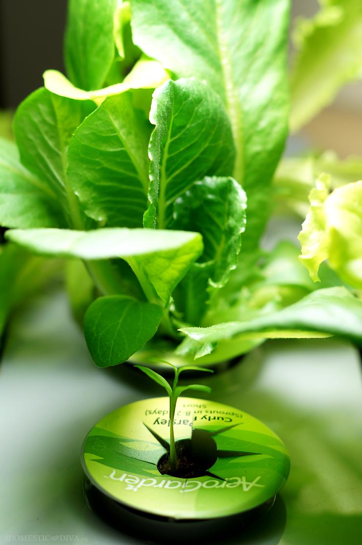 Gardener Chef Gift Idea How To Grow A Garden Indoors 400 x 300