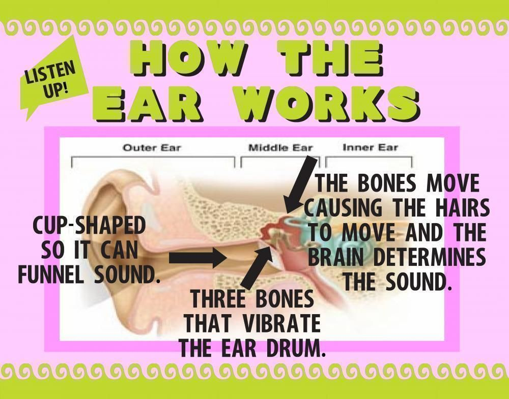 Make a Science Fair Project about how the human ear works Human