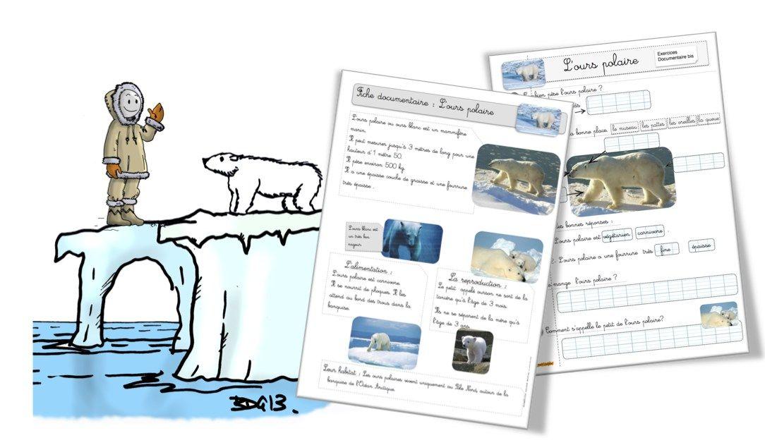 L ours polaire la fiche documentaire - Animaux pole nord ...