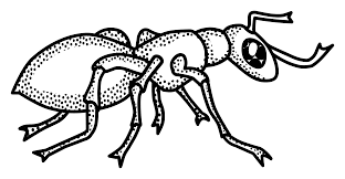 Image result for ant for coloring