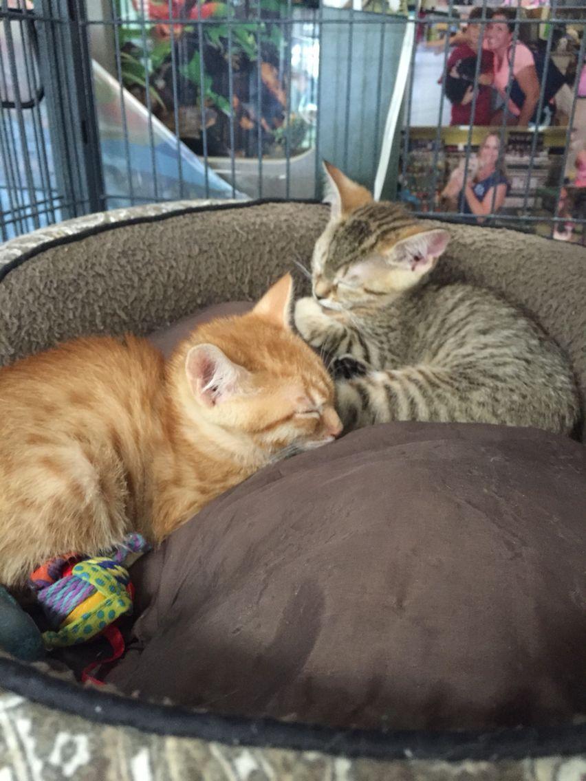 kittensssss