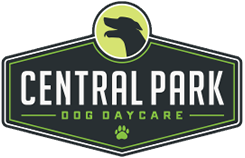 Logo Png 245 158 Dog In Spanish Dog Insurance Dog Daycare