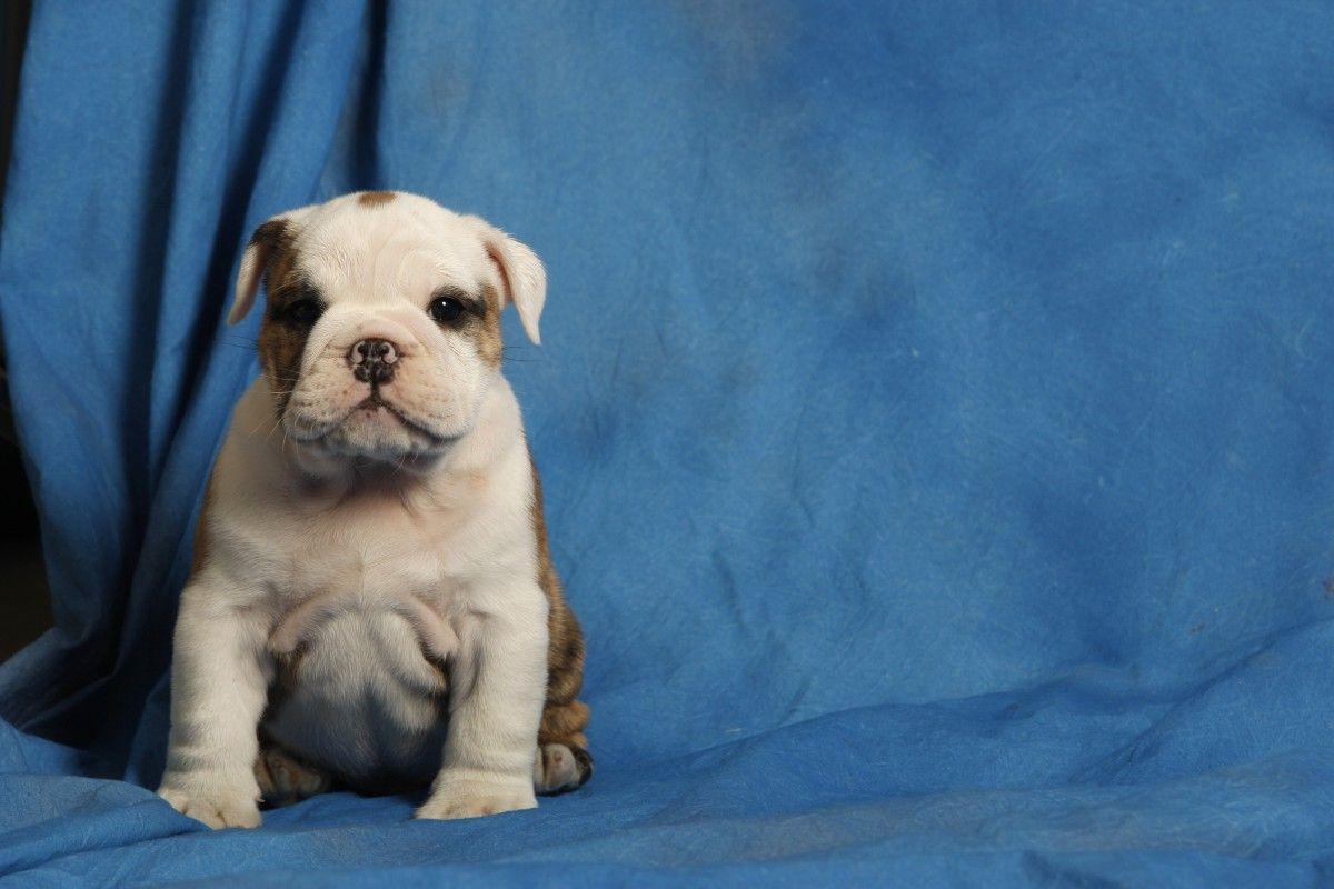 Blue Cutest Puppy Ever Dog Love New Puppy