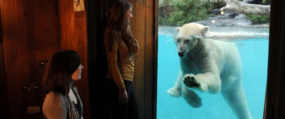 In France, A Night at Zoo Sleeping with a Polar Bear http://goo.gl/BWVqOX  #PolarBear #France   #Zoo