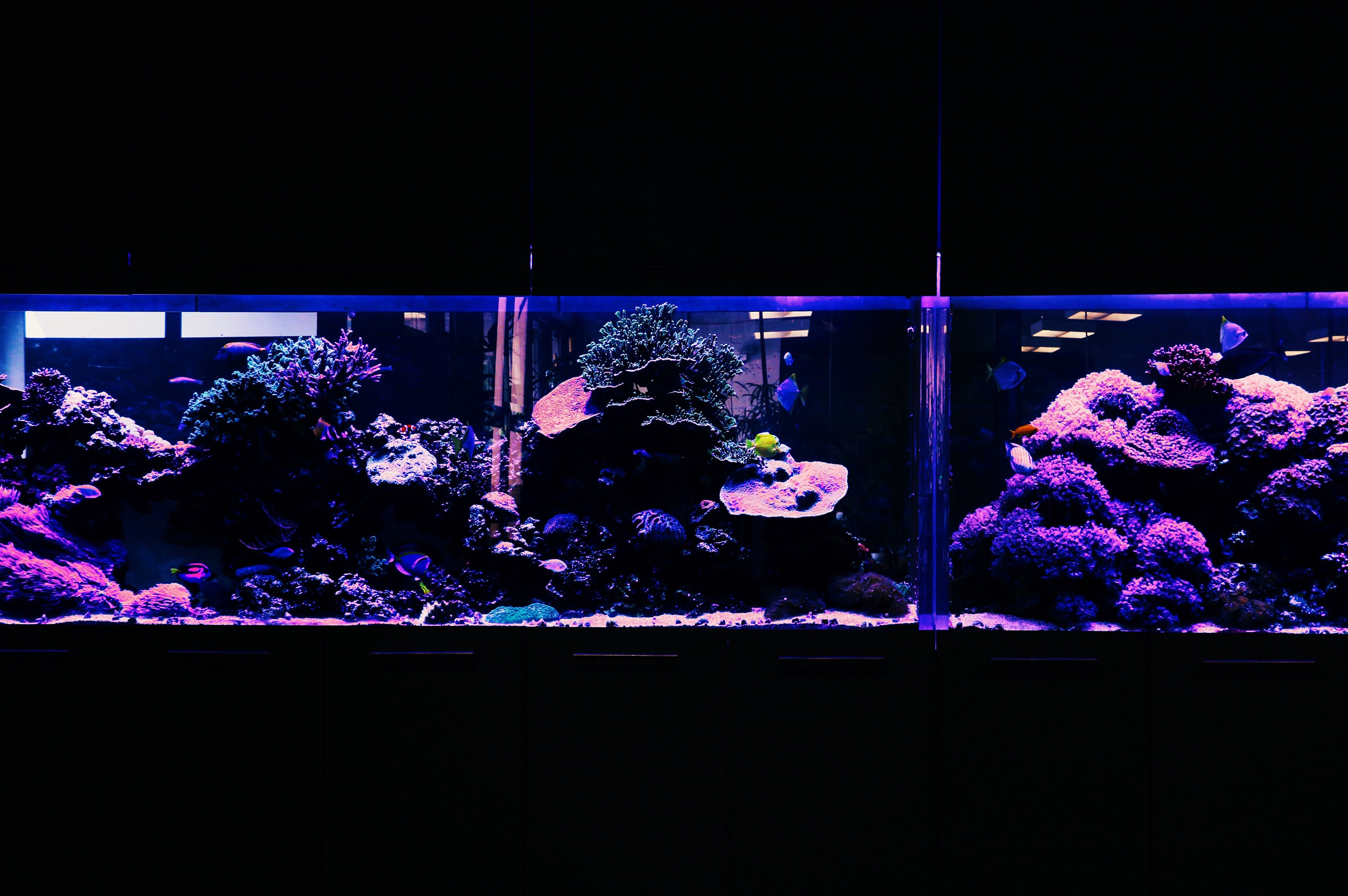 We have many different fish inhabiting this fish tank.