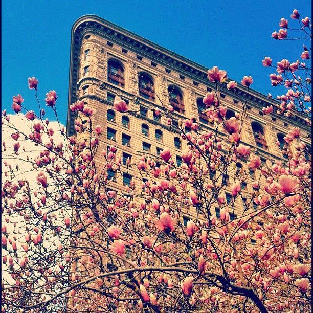 NY Spring (by @MariaJesusV )