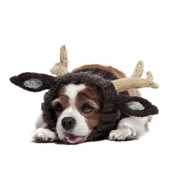 Pin de Amy Harmeier en Make Room for the Dog! | Pinterest | Lilas
