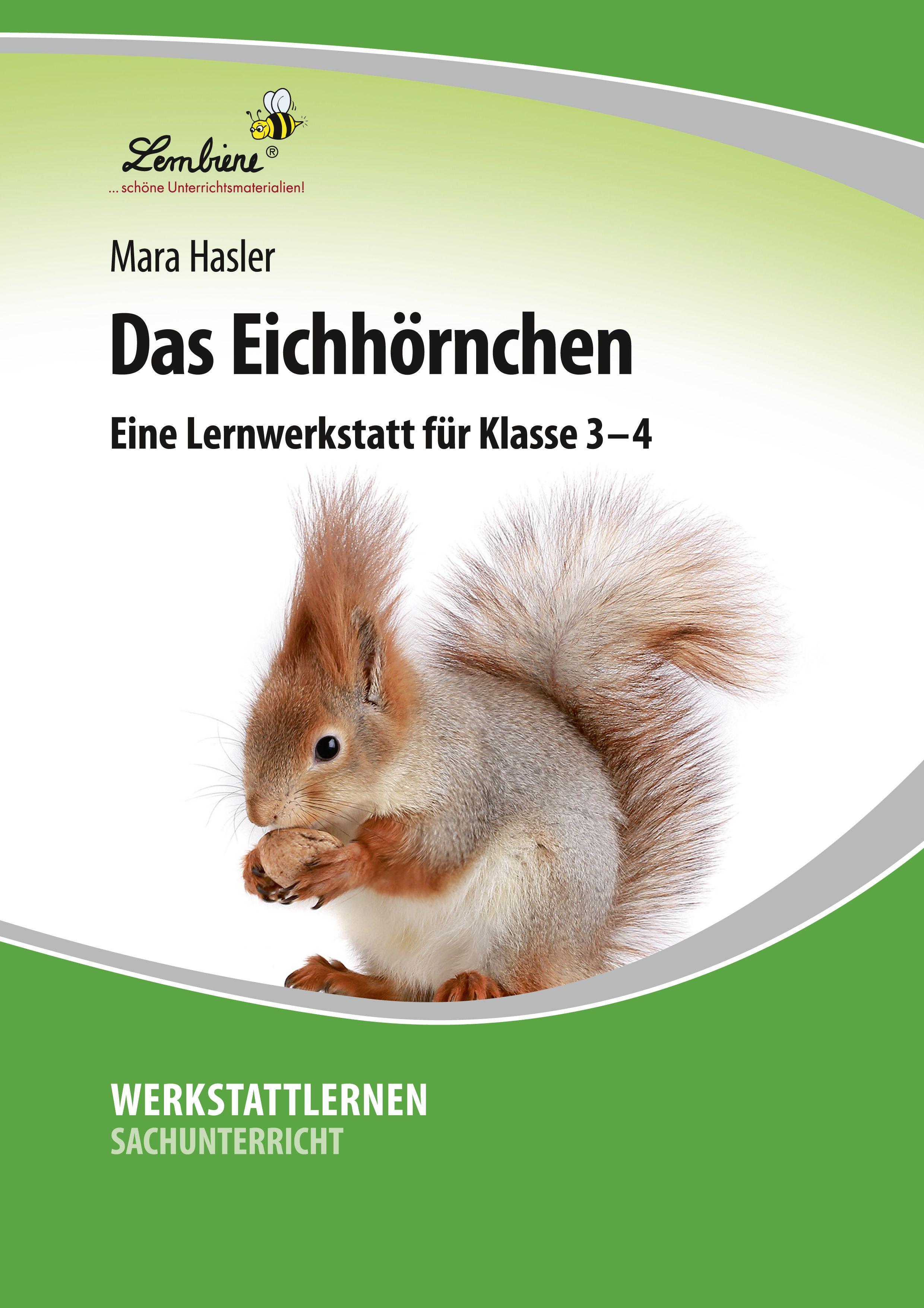 20 Eichhörnchen Ideen   eichhörnchen, sachunterricht grundschule ...