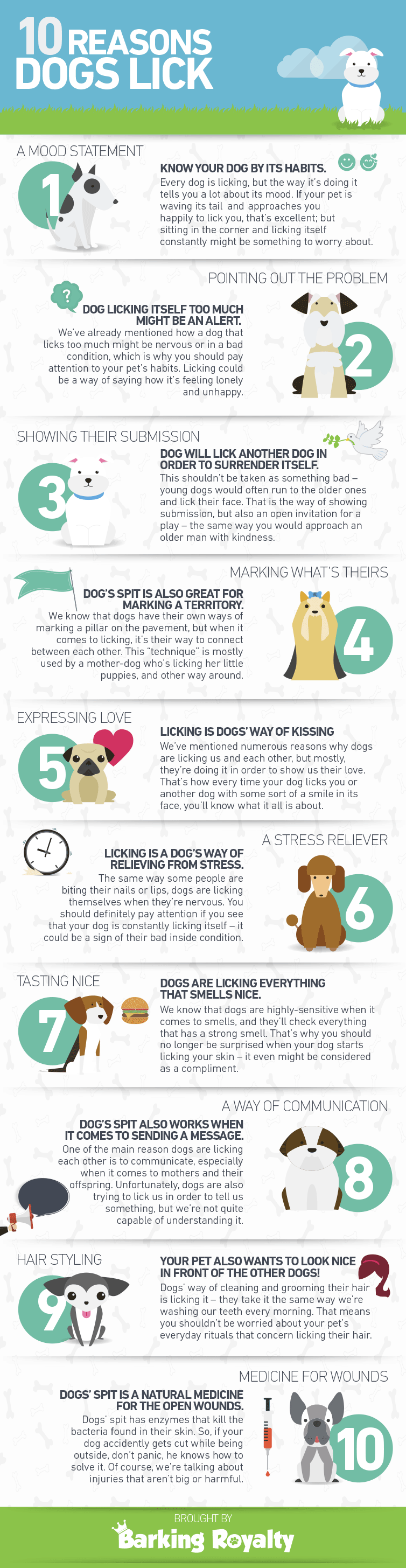 10 Reasons Why Dogs Lick Infographic