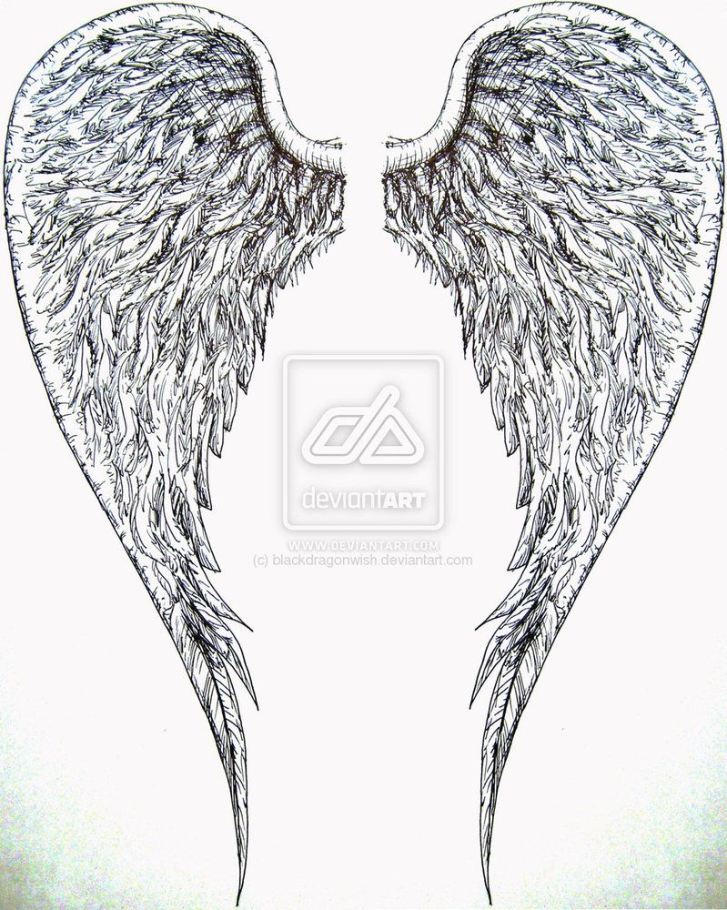 Google Image Result for http://th01.deviantart.net/fs39/PRE/i/2008/315/e/b/angel_wings_by_blackdragonwish.jpg