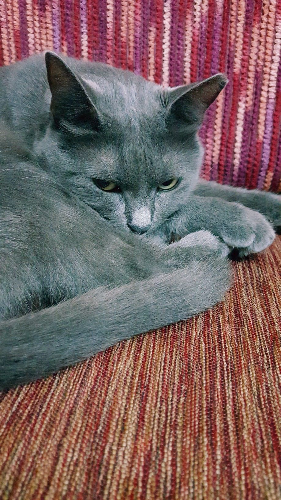 mişa 🐾🐱🎈♥️🌼 Cat pics, Grey and white cat, Cats