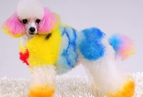 Pet Owners In Malaysia Begin To Dye Their Pets Into Rainbow