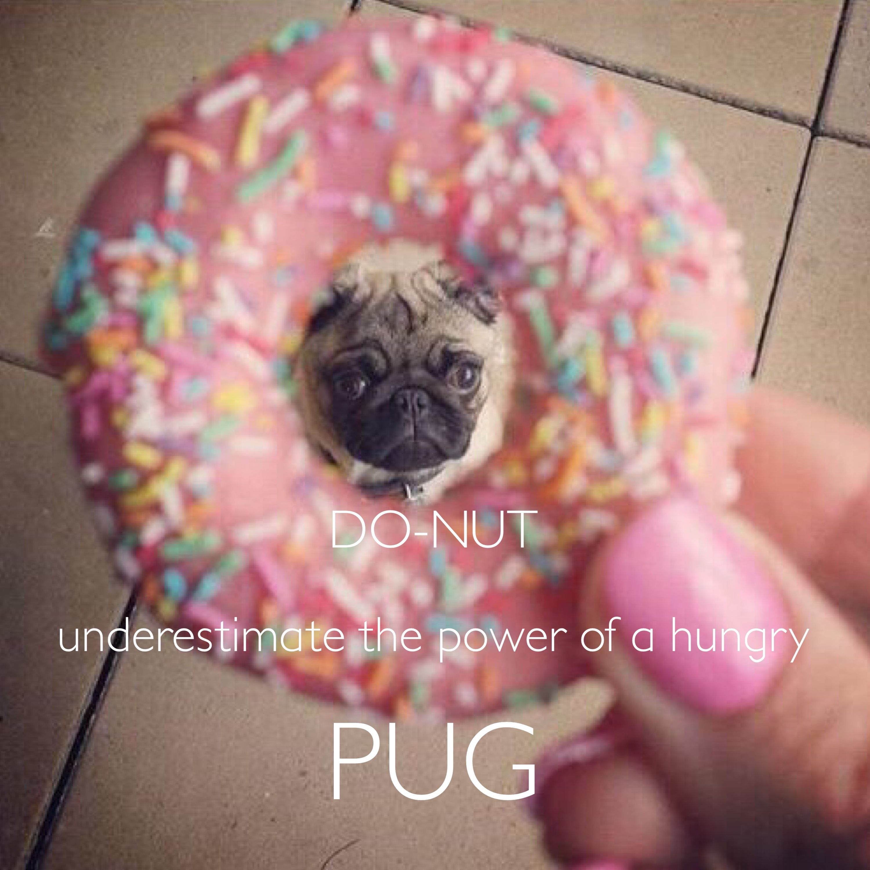 Donut underestimate the power of a hungry pug Created