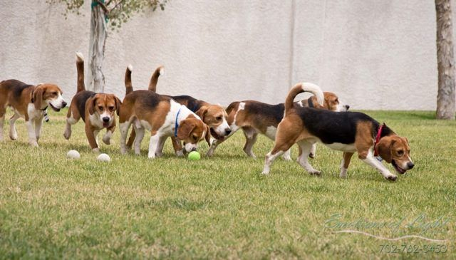 Rescued Research Beagles Experience Life Outside A Cage For The