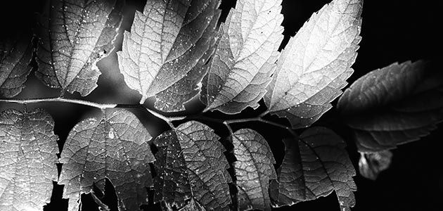 Color versus black and white free quick guide photzy · photo tutorial cameraspdfcamera