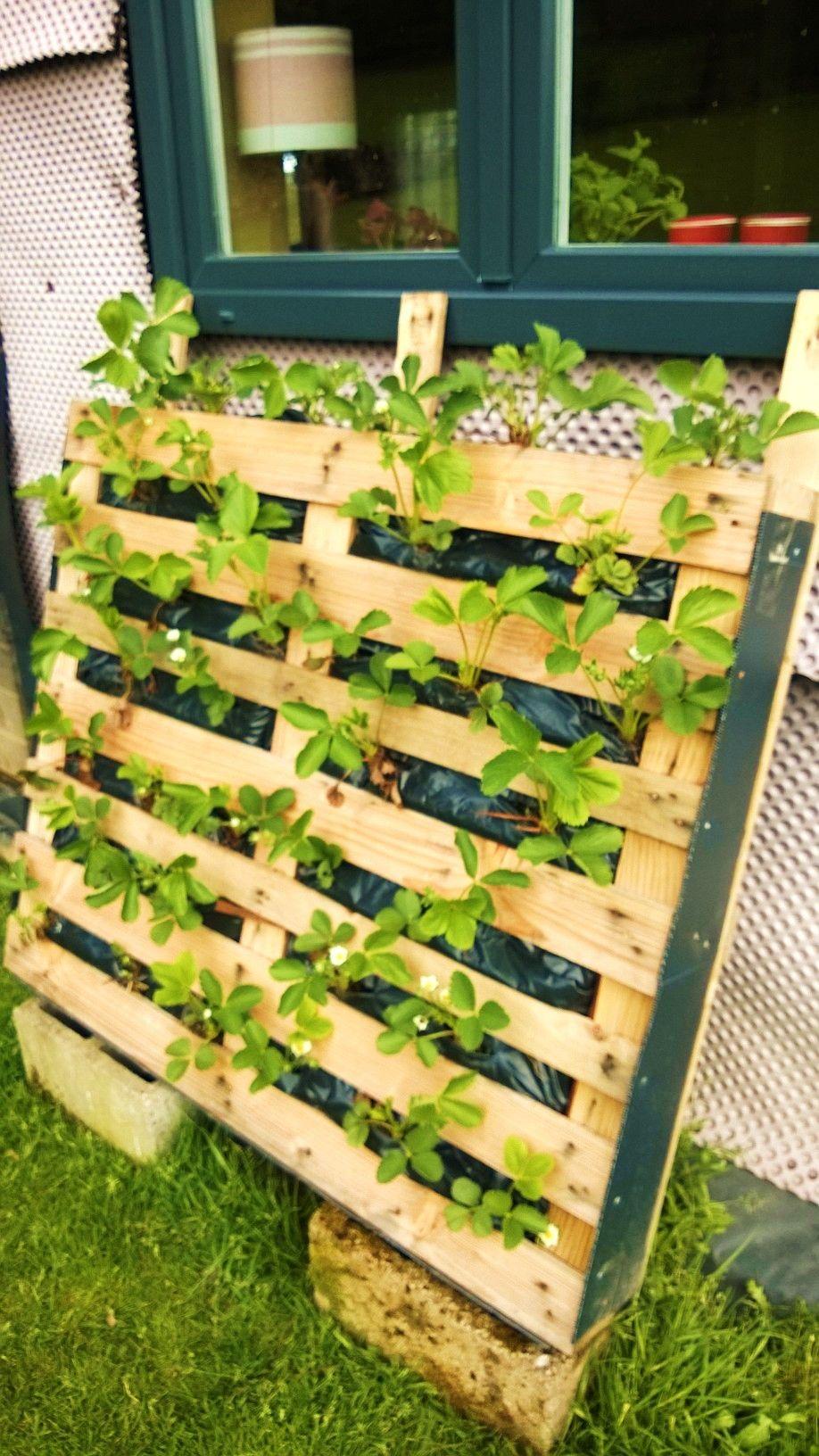 Des fraisiers sans limaces... Jardinage palette, Idée