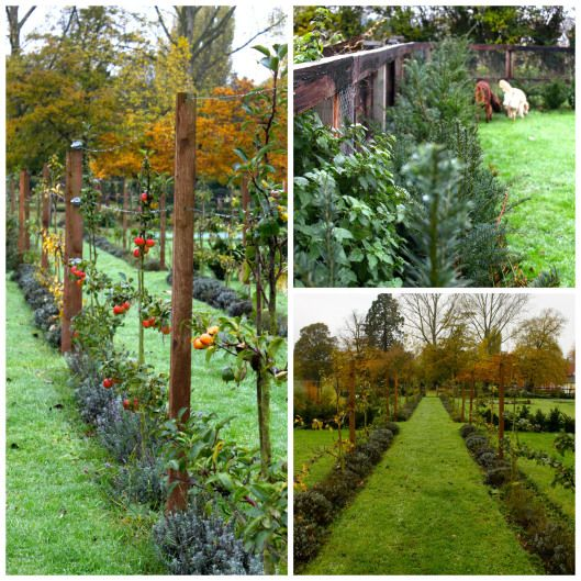 Posts About Espaliered Fruit Trees On Peonies Posies Fruit Trees Garden Planning Espalier Fruit Trees