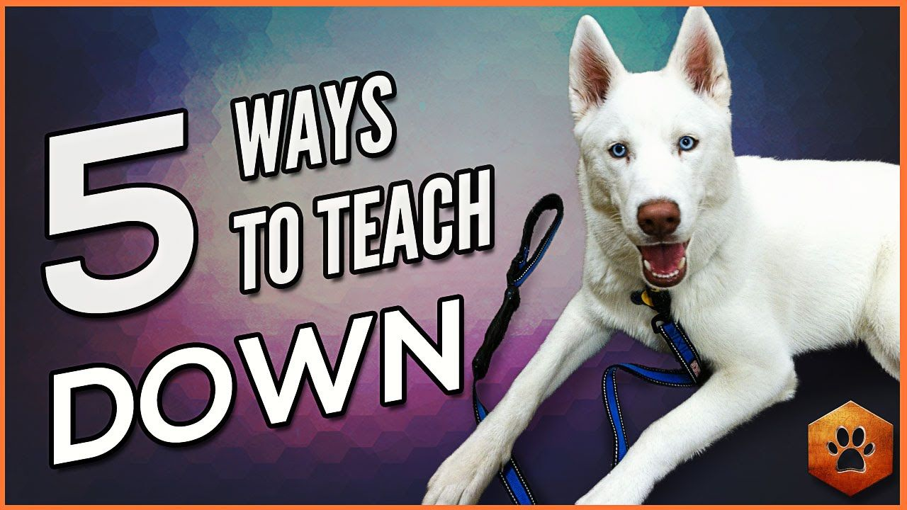 Teach A Dog To Lay Down 5 Alternate Methods For All Dogs