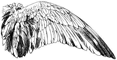 vintage wings clipart, handbook of ornament, franz meyer, black ...