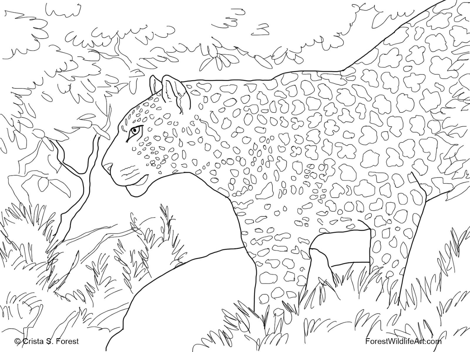 Kids Coloring   Coloring pages wallpaper   Part 10   Bird coloring ...