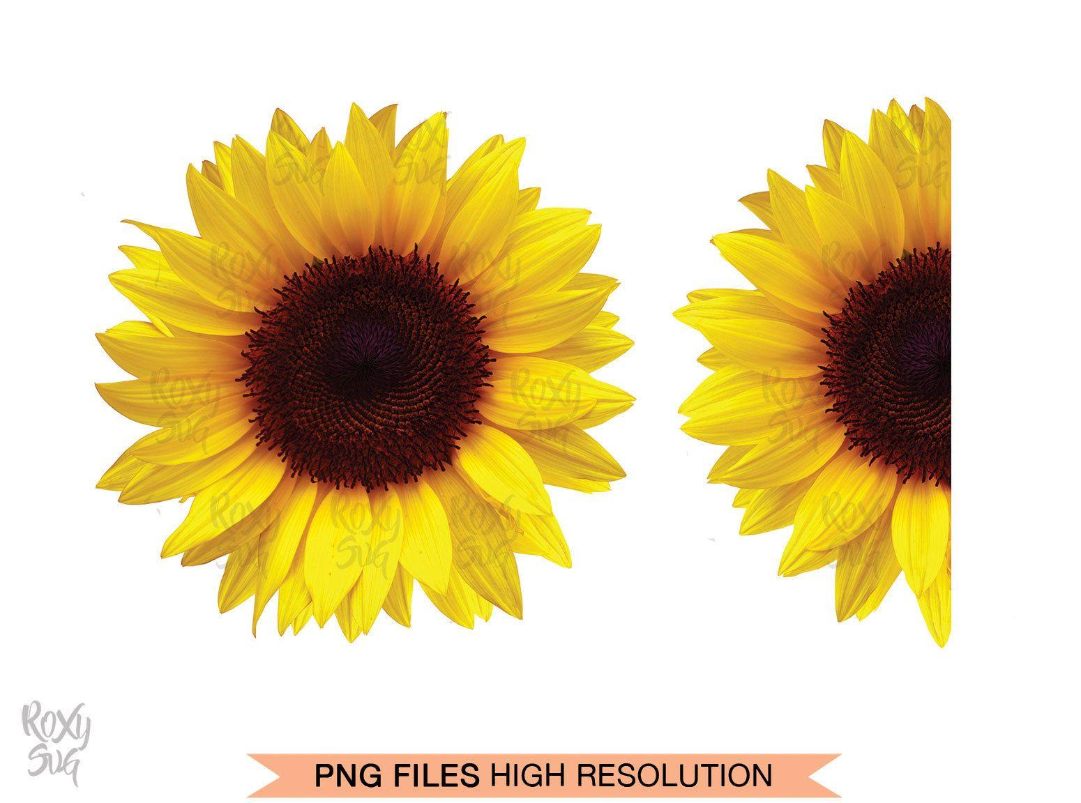 Half sunflower whole sunflower sunflower clipart sunflower