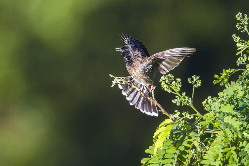 صوت البلبل اجمل انغام الطبيعة قائمة منوعة لتغريده طيور العرب Birds Animals Bird