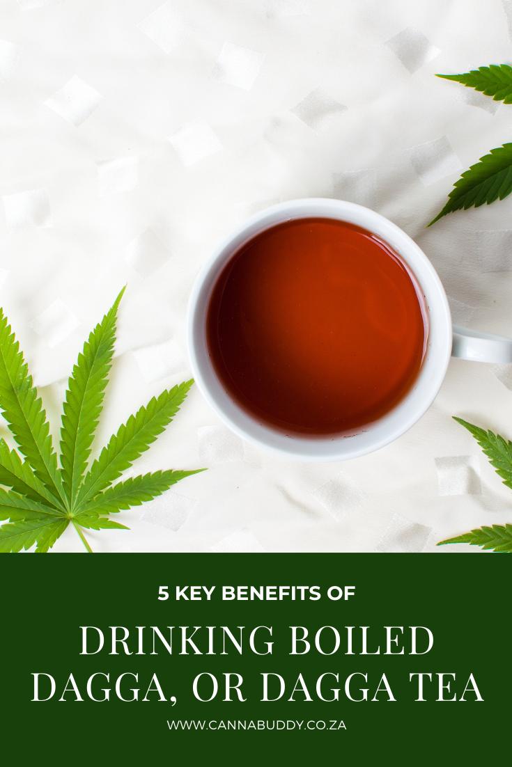 5 Key Benefits Of Drinking Boiled Dagga Or Dagga Tea Benefit Drinking Boil