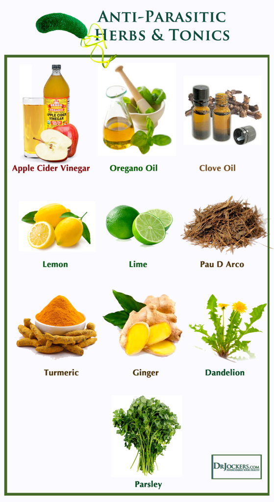 anti parasite diet food list