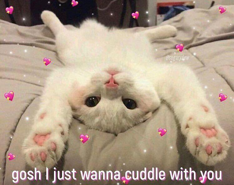 Lovememes Lovememe Ily Iloveyou Lovememes Lovememe Ily Iloveyou Wholesome Whole Cute Cat Memes Cute Love Memes Cute Memes
