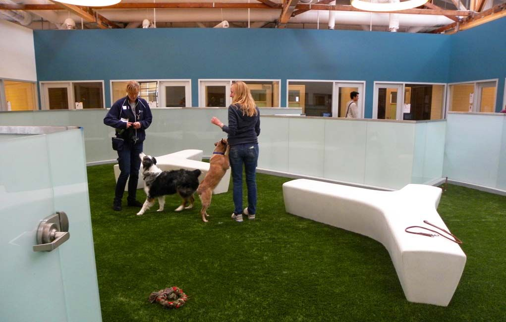 How To Start An Indoor Dog Park Jesse Indoor Dog Park