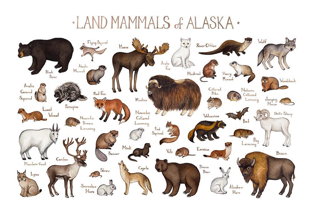 Alaska Land Mammals Field Guide Art Print Animais