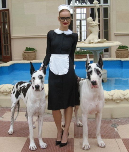10 Cool Facts About Great Danes Great Dane Facts Great Dane