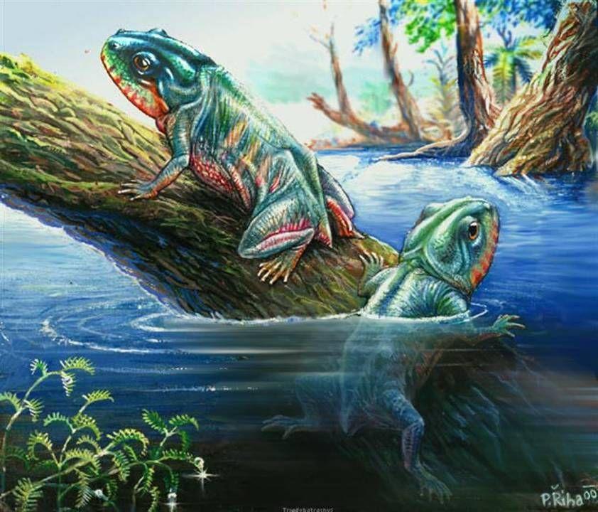 amphibian wikipedia the free encyclopedia dino