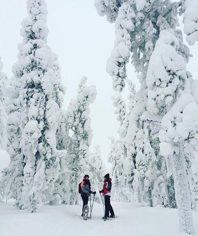 After energy day, you really need delicious dinner. Restaurant Kiisa is open daily from 4pm to 10pm. #RestaurantKiisa.  Ravintola Kiisassa voit nauttia energisen päivän päätteeksi maittavan illallisen. Avoinna joka päivä klo 16-22.00 #RavintolaKiisa  Thanks @emppusa sharing this wonderful pic with us  Pure white nature   #levilapland #visitfinland @ourfinland #visitlapland #ig_finland #suomiretki #snowshoe #adventuretime #wildernessculture #livefolk #liveoutdoors Levi, Lapland